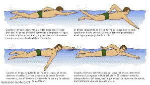 natación un deporte para todas las edades-crol