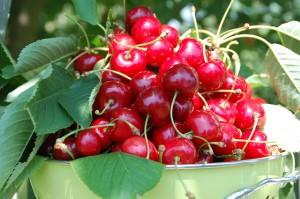 alimentos antioxidantes-cerezas
