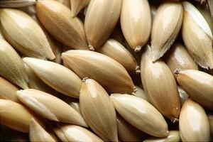leche-de-alpiste-semillas