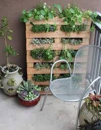 Comienza tu huerto urbano-cultivo vertical