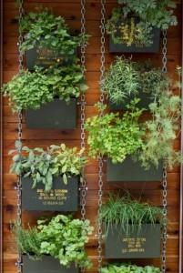 jardin urbano especies