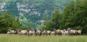 escap de la ciudad disfruta de la naturaleza - caballos campo