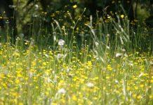 primavera peor estacion para alergicos
